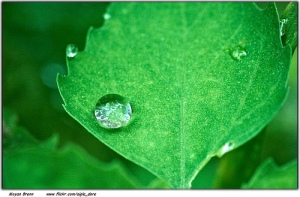Nature. Image by Moyan Brenn. Retrieved from FlickR. Used under Creative Commons Licensing.